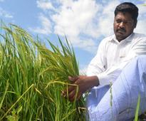 Indian basmati rice gets GI tag