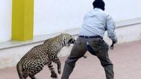 Leopard scare freaks out Bengaluru: 134 schools declare holiday today