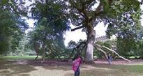 Plan for Malahide Demesne forest adventure centre axed