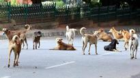 Stray dogs spaying slow in Thiruvananthapuram