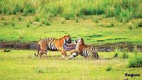 Centre to sharpen its focus on tiger estimation in Northeast