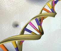 Scientists propose project to build synthetic human genome