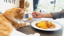 Jun's Kitchen: Meet Jun And Kohaku, The Human-Cat YouTube Cooking Team (VIDEOS)