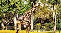 Zoo closure affects Mysuru hotels