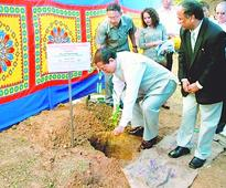 Cherry blossom to bloom in Aizawl