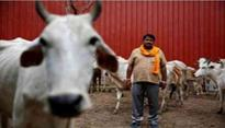Congress dares BJP govt to implement cow slaughter ban in Arunachal