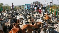 Cattle trade ban to halt beef exports, lead to job losses