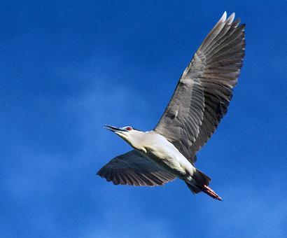 Flight of joy: 9 stunning pics of rare birds