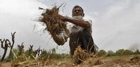 Arvind Panagariya Bets for Agri Reforms for '2nd Green Revolution'