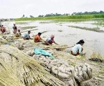 Food ministry's dilution of packaging norms can hit jute industry