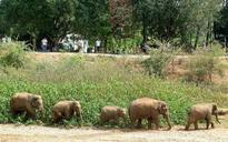 Wild elephants stray into Ambikapur town, force schools to shut down