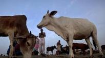 Rajasthan government plans to set up OLX-like portal for cows