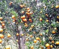 Orange producers' body floated