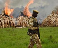 Ivory stockpile goes up in smoke