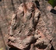 230 million-year-old dinosaur footprint found in north Spain