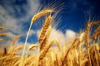 India Agribusiness Report Q3 2013