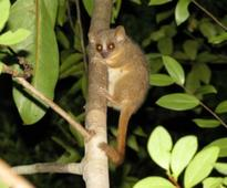 Three new species of lemur discovered in Madagascar