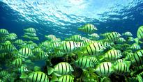 Rising Ocean Pollution Levels Are Making Fish Drunk