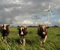 Farms a major air-pollution source: study