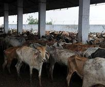 Muslim man in Gujarat to sit on 48-hour fast to spread message of cow protection