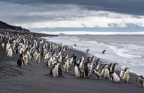 Fantastic voyage: scientists return from exhilarating Antarctic adventure