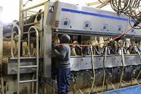 Puerto Ricans could ease South Dakota dairy labour shortage