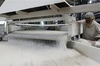 Sugar stocks surge upto 20% despite proposed duty on its export