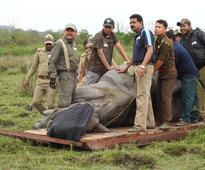 Three rhino poachers nabbed in Assam