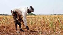 Maharashtra: Economic Survey stays mum on state's actual irrigated area