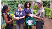 US Shiitake-Farmer Volunteers Work with Oyster Mushroom Farmers in Ghana
