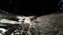 Sierra avalanche traps 3, causes indefinite closure of Hwy. 89