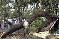 Three women estate workers die as uprooted tree falls on them