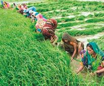 After Karnataka & MP, Centre too plans separate Agriculture Budget