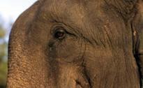 Wild Elephants Unleash Panic In Mayurbhanj Di...