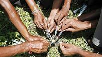 CID personnel, teacher arrested for drug trade in Jalandhar