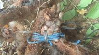 Traumatising post showing monkey, tortured and killed by medical students, goes viral