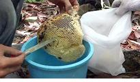 Is this honey Malaysia's healing...