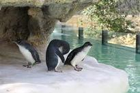 New facility at Melbourne Zoo aims to attract more visitors