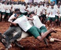 Union minister Pon Radhakrishnan tries to touch jallikattu bull, suffers minor injury