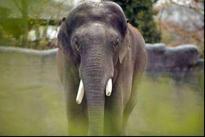 Forest watcher killed in wild elephant attack in Wayanad