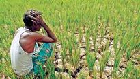 Not one tribal got land entitlement under FRA