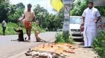 Kerala Cong(M) activists as sick as a dog!