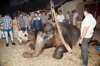 Mumbai: Elephant dies under mysterious circumstances at Film City in Goregaon