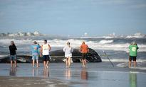 Dead humpback whale in Jersey Shore may have been trapped in fishing line