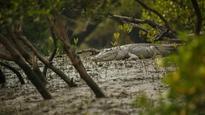 As crocodiles begin to mate, Bhitarkanika wetland says no to visitors