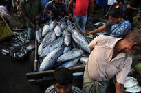 This is how fishermen came back to business after 45-days ban in Chennai