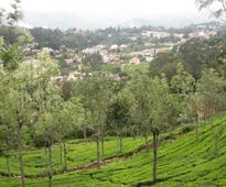 Sustainability certified India tea estates violate worker rights - report
