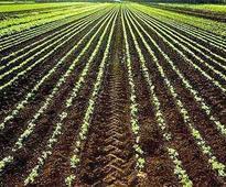 Government mulls safe options on farming