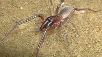 New spider species named after Jamaican reggae legend Bob Marley