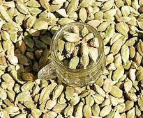 Cardamom up 2.7% on pick up in spot demand